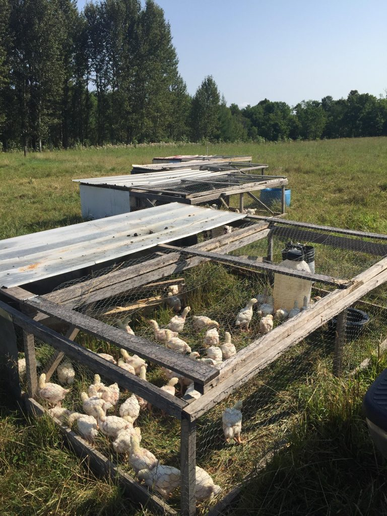Pasture Raised Chicken Pens