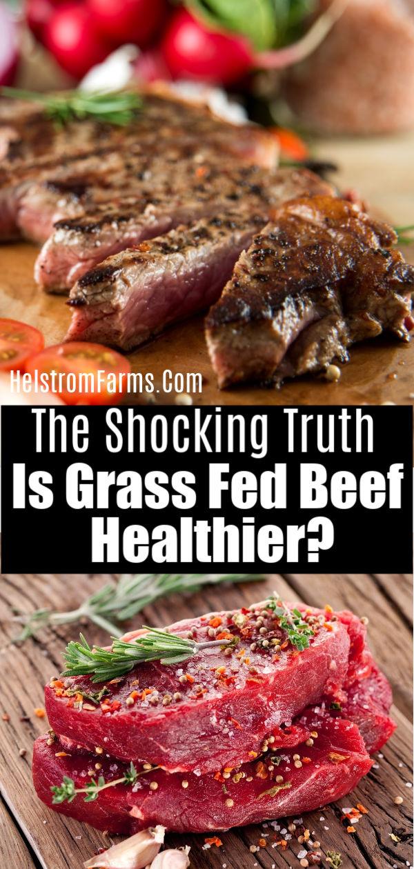 minnesota grass fed beef